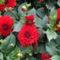 virágok 27