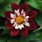 virágok 31
