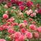 virágok 32