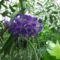 virágok 33