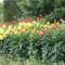 virágok 39