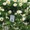 virágok 4