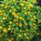 virágok 41