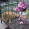 Jasminka Filip cicámmal