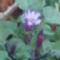Szeptemberi virágok 11