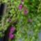 Szeptemberi virágok 13
