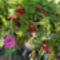Szeptemberi virágok 14