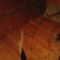 Halloween_dekoracio_1322996_3986_s