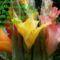 virág 2148418