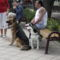 Barátaink kutyái 9