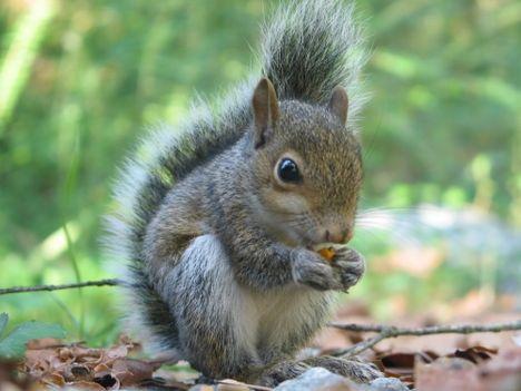 mókus-aranyos-képek-nb19565