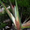 Filodendron 1