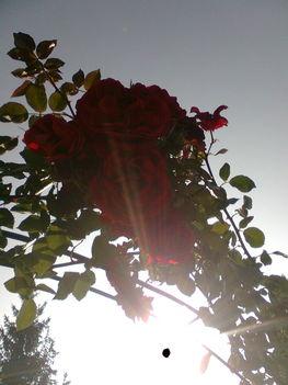 Őszi napfény ... 2012_okt