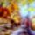 Őszi pillanatok 11