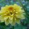 Sáfrányos rézvirágok 9