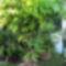 Túlkoros termő déligyümölcs, 2 m. felett 4