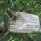 Túlkoros termő déligyümölcs, 2 m. felett - Pitanga