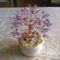 Gyöngyfa ( Erikának ) 2