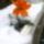 Tél_2012_november