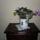 Növényeim