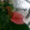 kivirágzott virágaim 17