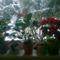 kivirágzott virágaim 18