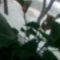 kivirágzott virágaim 22