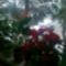 kivirágzott virágaim 8