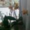 virágzó orchídeáim 18