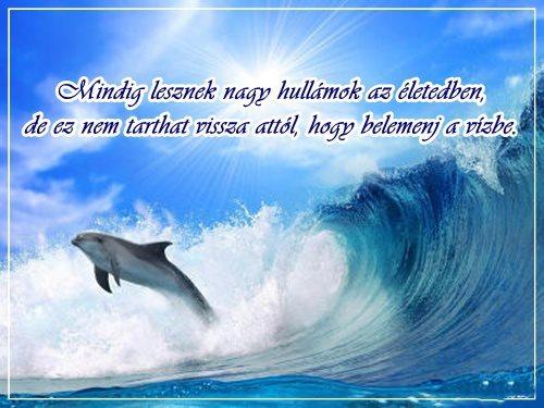 delfines idézetek delfines idézet (kép)