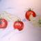 Paprikák és paradicsomok