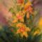 Sárga orchideák