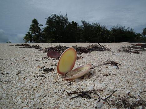 kagylók 2