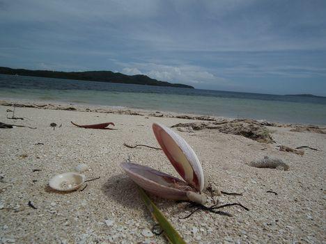 kagylók 5