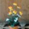 IMG_20130404_175702