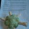 teknős és a minta