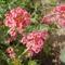 Sakantyúvirág