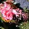 Virágkompozíció