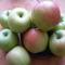35 dekás almáim