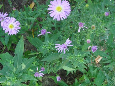 Szüreti virág