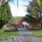 Canberra  tavaszi viragzas 5