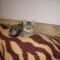 az örökbefogadott cicám