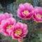 virágzás 1
