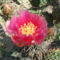 virágzás 2