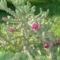 virágzás 3