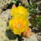 virágzás 4