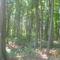 Erdő a Nyíregyházi vadasparkban