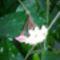 Virágaim 1