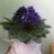 Virágaim 4