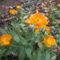 köröm virág